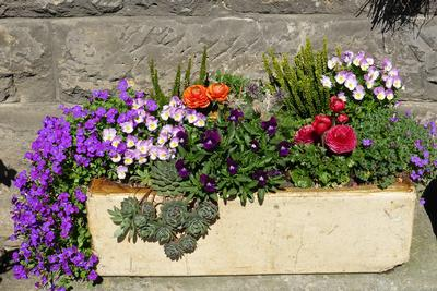 Flower-Box-Flowers-Garden-Container-Plant-Planters-1391954.jpg